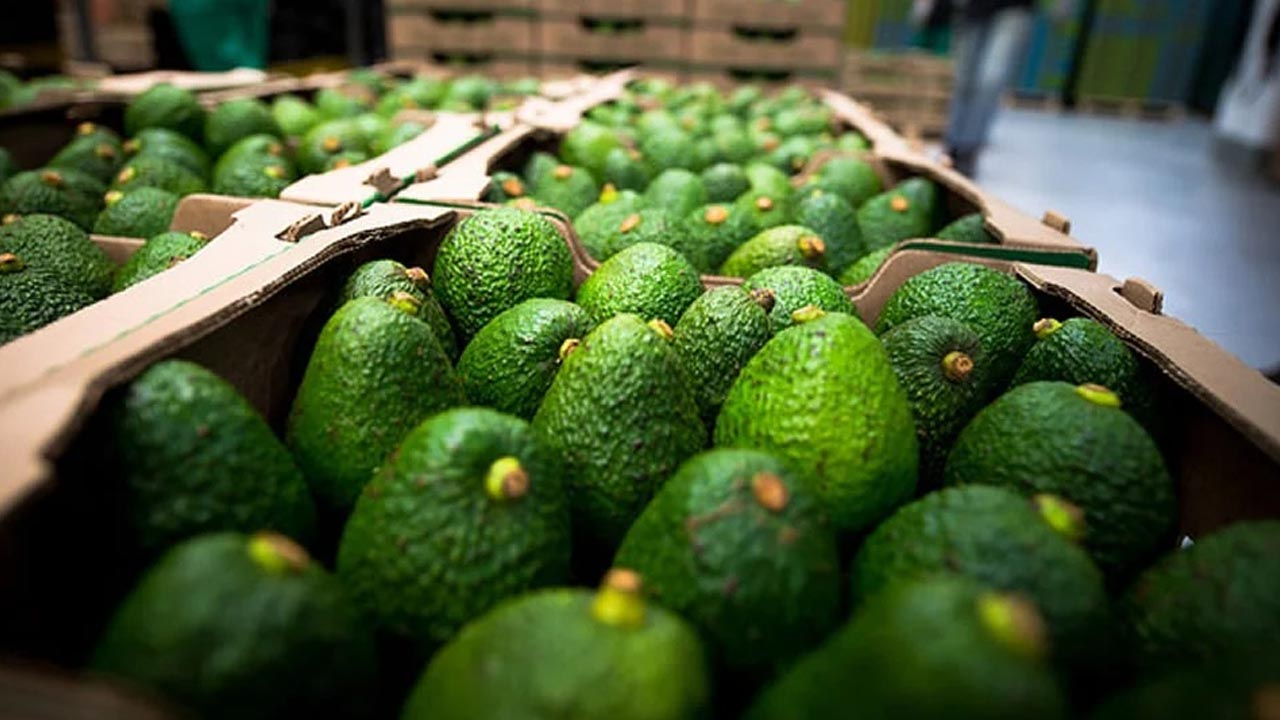 Colombia exportará aguacate tipo Hass a Chile